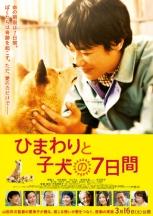 Himawari Chan and Her Puppies Film Poster