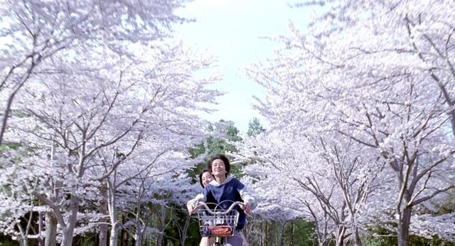 Umimachi Diary Sakura