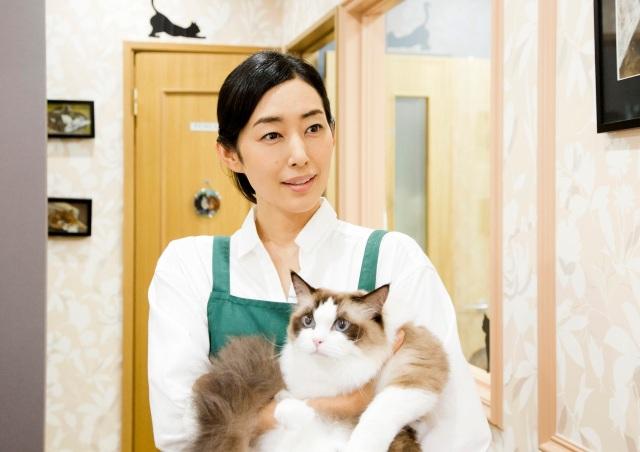 Neko Atsume Tae Kimura